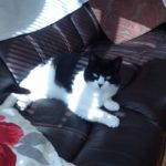 Missing from Clonee 6th Feb. Urgent! ****Home Safely!******