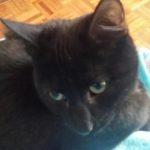 Meet Pavlova! Homed!