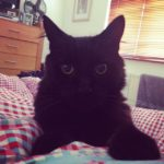 Pepsi is Missing from Baldoyle - 17th March