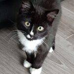 Meet Arthur! (Homed)