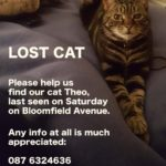 Tabby Missing from South Circular Road.