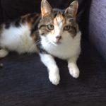 Meet Molly!
