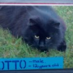 Otto is Missing From Kill in Co Kildare