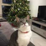 Female Missing from Clane Since 18th March