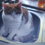Bursztyn is missing since 26th March from Swinford, Co Mayo **Home and Safe**
