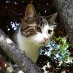 Penny is Missing Since 11th March From Blackhorse Ave.