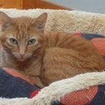 Meet Garfield!