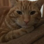 Harvey is missing from Tallanstown, Co Louth since the 23rd March **Harvey Is Now Home Safe & Well**