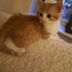 Meet Baby Archie!