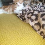 Two Fab Kittens Needing A Home
