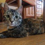 Meet Daisy! (Homed)
