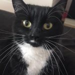 Min Min is Missing from Sutton/Howth Area since Tues 11th June