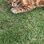 Young Ginger Male found in Castleknock Aug 19
