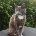 Indie is Missing from Howth Since Aug 8th