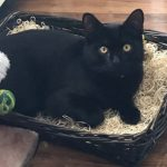 Male Black Cat Missing From Cabra, D.7 Since Saturday 31st Aug *** HOME & SAFE***