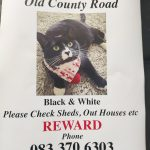 Lola Is Missing from Crumlin Area of Dublin Since Sep 11th