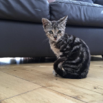 Two Adorable Female Kittens for Adoption.
