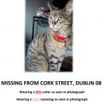 Skittles is Missing from Cork Street, D8.