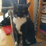 Black and White Cat Found in Clane Kildare on Oct 4th