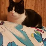 Sid is Missing from Portmarnock Since the 6th Oct