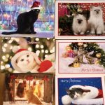 Our Absolutely Gorgeous Cats Aid Christmas Cards Are Now Available!