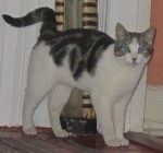 Cat Missing from Rialto Dublin 8 since Nov 7th