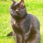 Missing from Enniscorthy Since Sunday 27th Oct