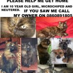 Tortie Missing for 2 years.