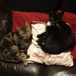 Black Cat Missing from Slane in Co Meath Since December 9th