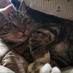 Male Tabby called Ciastek is missing from D.12 since Dec 21st.