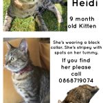 Heidi (Tabby) is Missing from Terenure Since May 8th.