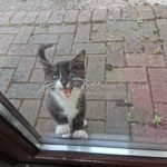 Kitten Found Enfield at the end of May 20