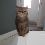 Bagpuss Is Missing From Cabra West Since June 3rd