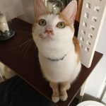 Ginkgo Is Missing from Drimnagh since May 15th
