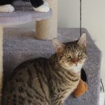 Kuma Is Missing From Clarehall Estate Since June 19th