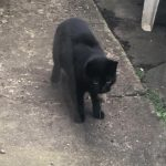 Mikki Is Missing from Deansgrange Area since June 10th