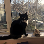 Baloo Is Missing from Bray since 28th May (Home Safe)