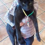 Catty is missing from Friarstown,Grange,Co.Limerick