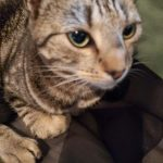 Daisy Is Missing from Clogher Road/Sundrive Park Since Friday July 10th