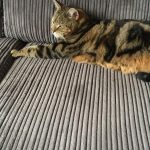 Sir Pounce The Tabby Is Missing from Killiney Since Thursday 9th July