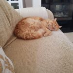 New Home For Gizmo Who Is A Fabulous Ginger Tom!(HOMED)