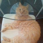 Hairby Is Missing From Ballyfermot Since July 6th