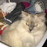 Kiki Is Missing From Clontarf Road Since June 28th