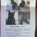 Chester Is Missing From Tallaght Since Aug 4th