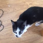 Friendly Cat Found, Finglas, 28th Aug.
