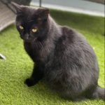 Black Cat Found in Bray during Lockdown!