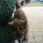 Tortie Found in Lusk, Sep 2020