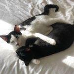 Meet Aston & Alvin!