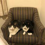 Meet Jasmine & Jasper!