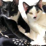 Meet Aston & Alvin!(Homed)